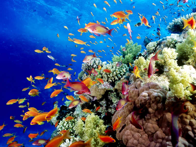 Our Dream Vacations Diving The Great Barrier Reef