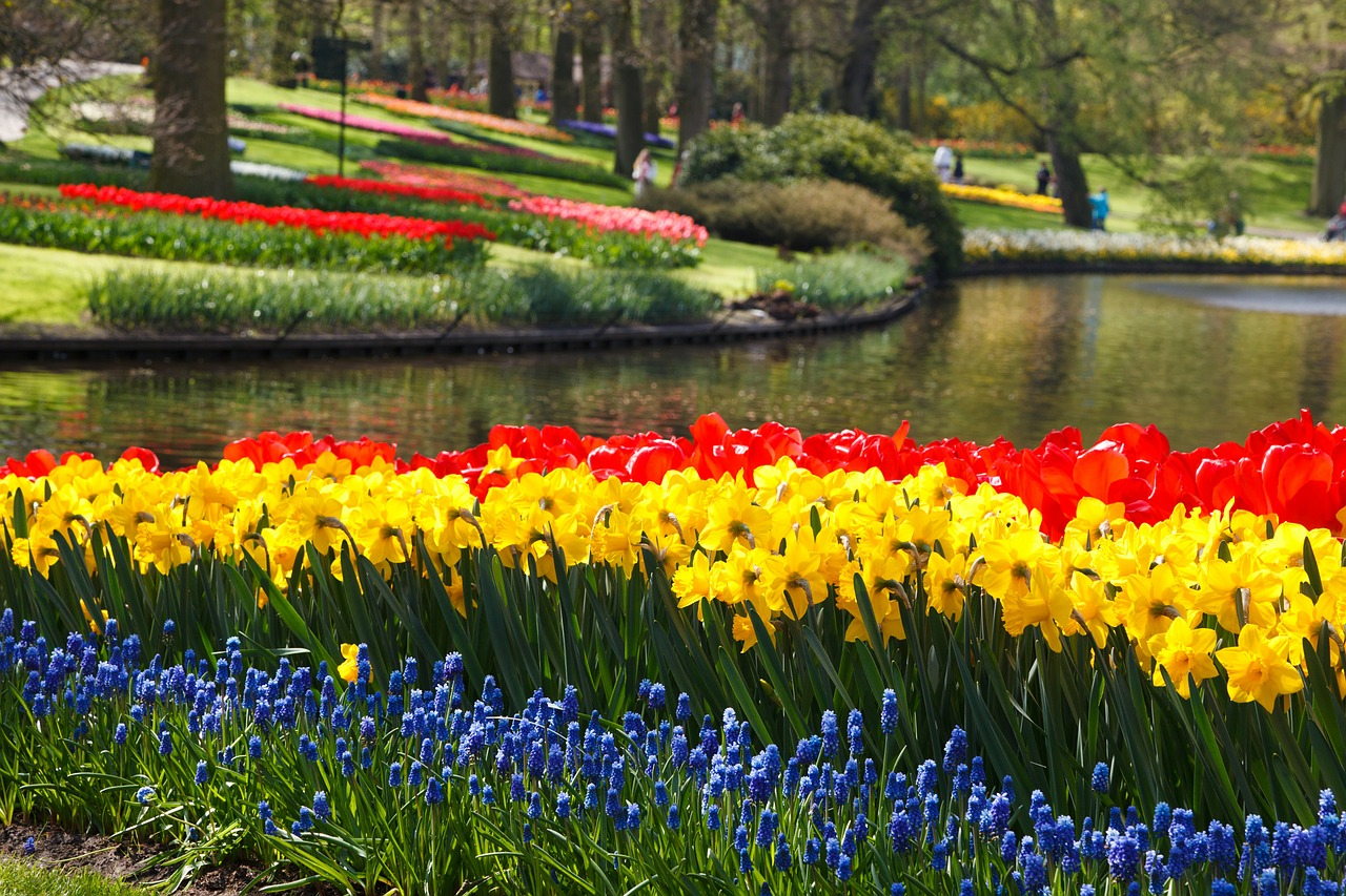 Its Tulip Time In Holland Wireless Traveler - Holland tulip festival