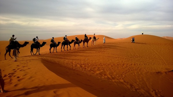 Safari camel ride - group exotic travel